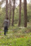 IMG_7881.jpg ahihud forest