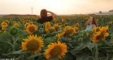 IMG_8749.jpg   Sunflower