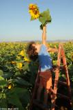IMG_8891.jpg   Sunflower