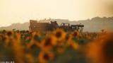 IMG_9017.jpg  Sunflower