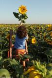 IMG_8914.jpg  Sunflower