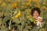 IMG_9099.jpg  Sunflower