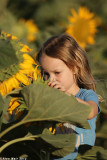 IMG_9111.jpg  Sunflower
