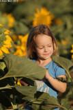 IMG_9115.jpg  Sunflower