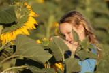 IMG_9121.jpg   Sunflower