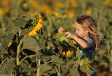 IMG_9129.jpg  Sunflower
