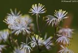 Microscopic Fireworks