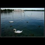 ... Around the lake ...