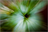 Green Cosmos