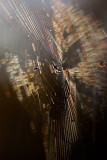 Backlit web in morning light