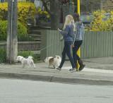 2 ladies, 2 dogs