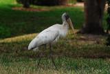 Pelican Pointe, Venice, Florida