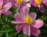 Zen Garden flower
