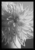 Last bloom from my garden
