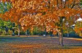 Shiloh Kodachrome