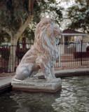 Lion on Guard