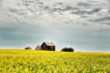 In a Field of Yellow