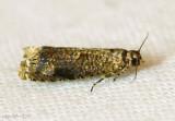 Sumac Leaftier Moth Episimus argutana #2701