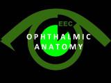 Ophthalmic Anatomy
