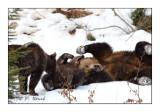 Bear games - 4681