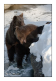 Bears game - 5123