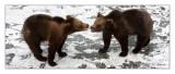 Bears - 5231