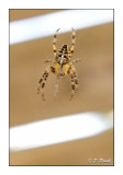 Light and wood spider - 7839