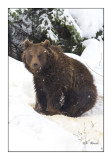 Big cub - 6452