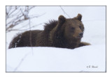 Cubby Bear - 6558