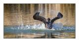 Jeux d'eau du cormoran - 8158