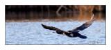 Easy Flight across the water - 8543