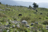 Xanthos March 2011 5110.jpg