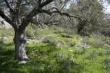 Xanthos March 2011 5260.jpg