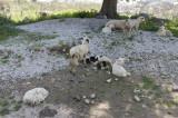 Xanthos March 2011 5285.jpg