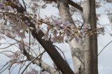 Kash March 2011 6035.jpg
