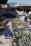 Mugla March 2011 6263.jpg