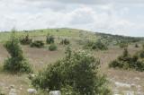 Amasya june 2011 7749.jpg
