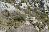 Termessos march 2012 3690.jpg