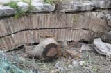 Limyra march 2012 5228.jpg