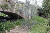 Limyra march 2012 5231.jpg