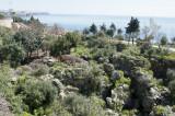 Antalya march 2012 2884.jpg