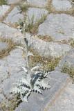 Antioch in Pisidia 20062012_2907.jpg