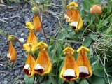 The Flora of Patagonia