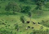 Pasture in Bermejo