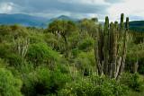 Landscape near Mataral