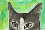 Cats Eyes a  watercolour and pen Painting