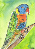 ACEO PARROT Watercolour, pen and ink