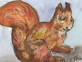 ACEO Red Squirril  SOLD