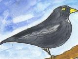 ACEO Blackbird Watercolour, pen and ink