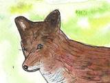 ACEO FOX Watercolour, pen and ink SOLD